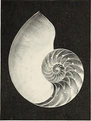 Anglų lietuvių žodynas. Žodis thin-shelled reiškia plonas-su kevalais lietuviškai.