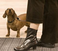 raft014 (a.burdenko) Tags: dog canon ukraine menschen hund musik