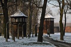 Auschwitz (028)