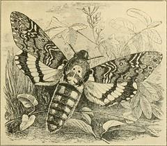Anglų lietuvių žodynas. Žodis capsidae reiškia <li>capsidae</li> lietuviškai.