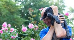 inthegarden (roscoepoet) Tags: puppy lawrence ku kansas dennis dennisabbot
