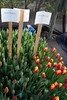 Floricultores paininos visitan empresas en Quillota (En el corazón de Chile) Tags: flores bulbos floricultores prodesal