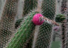 Botanicka Zahrada III (tantonr) Tags: flowers prague botanicalgardens botanicazahrada