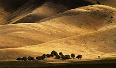 trees sunset landscape shadows scenic hills juniper goldenhills junipertrees cheatgrass millardcountyutah arbyreed
