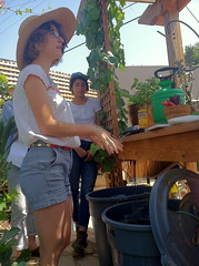 IMG_8059 (wccw_la) Tags: workshop planting composting
