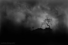 THE LONELY TREE (ManButur PHOTOGRAPHY) Tags: travel sky blackandwhite cloud mountain nature clouds landscape volcano blackwhite scenery availablelight explorer monotone explore cannon 5d dslr monocrome markiii sillhuette sillhuet 5dmarkiii manbutur manbuturphotography