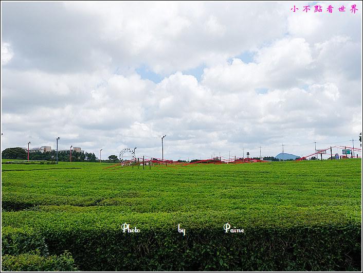濟州島innisfree館 綠茶博物館 (56).JPG