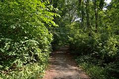 A Path in the Bronx (Eddie C3) Tags: newyorkcity bronx nycparks vancortlandtpark
