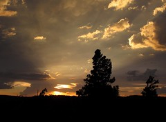 Beam Me Up (zoniedude1) Tags: sunset summer arizona sky southwest nature beauty forest skyscape outdoors evening view sundown silhouettes adventure explore monsoon edge rim exploration discovery stormclouds stormyweather mogollonrim therim thunderstorms highcountry beammeup coconinonationalforest coloradoplateau coconinonf zoniedude1 earthnaturelife canonpowershotg12 7600ftelevation rimexpedition2014