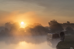 Summer Mist - Shortlisted in OPOTY 2014. (JRTurnerPhotography) Tags: uk greatbritain trees summer england sun sunlight mist southwest tree water animal animals fog thames sunrise canon river lens landscape mammal landscapes cow boat europe unitedkingdom britain sunny august cotswolds farmland gloucestershire lee gb l 5d british canon5d filters sunrays grad riverthames narrowboat westcountry 2014 britishcountryside 24105 lseries 24105mm lechlade talkphotography mattfranks leefilters lechladeonthames jaketurner gradfilters canonef24105mml canon5dmarkiii 5d3 5dmarkiii 5dmark3 canon5dmark3 jrturnerphotography peterhulance