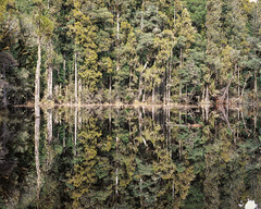 Waihora Lagoon (gomezthecosmonaut) Tags: film largeformat fujiprovia100 toyoview45g fujinona240mmf9