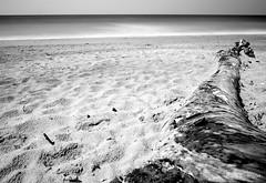 Driftwood (mswan777) Tags: summer sky bw sun white seascape black beach nature water monochrome landscape outdoors sand nikon waves scenic driftwood ansel d5100