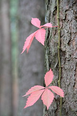 Autumn is coming (2/3) (Vasquezz) Tags: autumn colour forest herbst wald farbe bunt