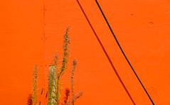 abstract on orange