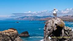 708 seagull LR (bradleybennett) Tags: water river ocean stream creek beach shore shoreline line coast tide