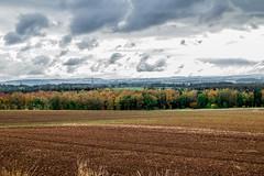 Autumn colours (D.A.M) Tags: autumn autumncolours dog dogs forest bordercollie eastlothian scotland westsaltouneastsaltoun westsaltoun eastsaltoun