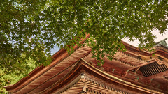 Kaidan-in roof and maples (Tim Ravenscroft) Tags: kaidanin roof maples foliage architecture hiei kyoto japan