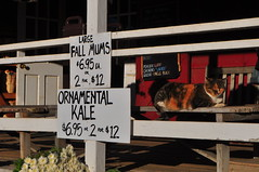 Cat at Terhune Orchards (Triborough) Tags: nj newjersey mercercounty princeton terhune orchards cat
