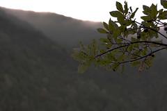 dopo la pioggia (conteluigi66) Tags: autunno foglie ramo gocce pioggia bosco montagna sera