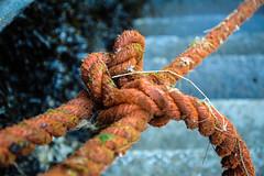 DSC_0073 (jameshowardphotography) Tags: rope orange tied knots steps flecks fishing