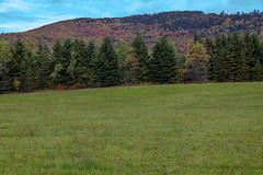 Coos County Road Trip (blackseal35) Tags: 2016 24105l canon canonti1 cooscounty errol fall nh newhampshire northwoods whitemountains c color colorful colors cows field leafpeeping leaves mountains river roadtrip stream view water woods