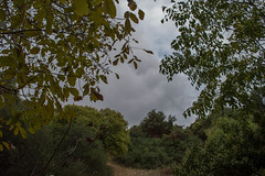 (Psinthos.Net) Tags:  psinthos nature countryside valley psinthosvalley fasoulivalley          fasuli fasouli fasoulipsinthos fasoulipsinthou cloudiness cloudy    clouds trees   leaves autumnleaves    sky autumn november    walnut   tangerine drygrass   treebranches field  hill   shrubs afternoon