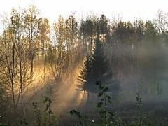 Sunrise in the misty woods, IMG_3585 (jgagnon63@yahoo.com) Tags: fallcolor autumn october fall camp dickinsoncounty upperpeninsula uppermichigan backlighting morning
