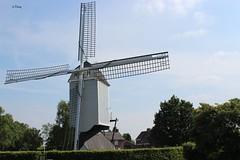Bergeijk: Flour mill (18th century) ( Corry ) Tags: molens windmill bergeijk netherlands korenmolen flourmill