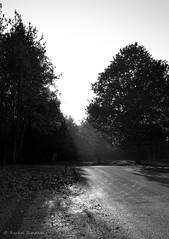 Shadows (R_S_2014) Tags: nikond3100 nikon winter2015 november lanarkshire southlanarkshire chatelherault bw blackandwhite