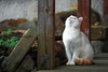 Love is in the air (Claudia G. Kukulka) Tags: cat animal white pet weis tier calico katze haustier caturday world100f