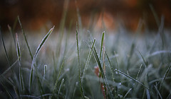 frozen grass (Marcus Rahm) Tags: frozen morning morgen grass green bokeh nature natur naturallight autumn herbst herbstfarben