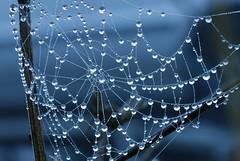 Nature's Beauty (azyef94) Tags: nature drops rainy spiderweb regentropfen photography natureshots flickrnature