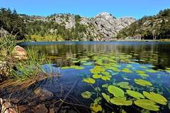Klares Wasser (Panasonikon) Tags: panasonikon nikond7100 sigma1020 norwegen landschaft landscape see lake wasserpflanze weitwinkel