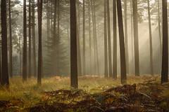 Vinney Ridge Enclosure (Stu Meech) Tags: vinney ridge enclosure new forest hampshire autumn mist fog nikon d750 70200 stu meech