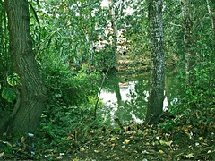 ...:::Bosque:::... (Koral Skatha) Tags: río bosque árboles naturaleza foto tonos luz natural luznatural forest hojas verde tree river fotos tardes tardesdefotos lago madera color agua