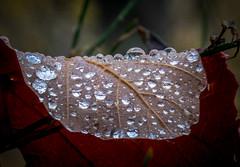 Sheet with raindrops (Jacint) Tags: raindrops