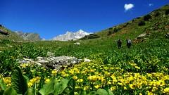 During Naltar Pass Trek (Raskoh (-------)) Tags: naltar valley nature northernpakistan gilgitbaltistan gilgit arslanmirza trekinginpakistan mountains karakoram ishkoman northernareas tourism