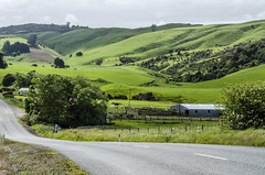 Rolling meadows landscape (firstfire53) Tags: newzealand southisland catlins rollinghills