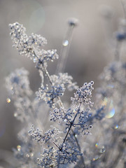 Un monde en argent ** (Titole) Tags: frost frosted bokeh titole nicolefaton thechallengefactory