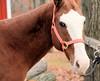 Are you looking at me? (howardj47) Tags: howardj canon 5dmarkiii horse