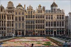 Bruxelles (hanquet jeanluc) Tags: 2016 bruxelles fleurs grandplace tapisdefleurs qdub liege belgium be