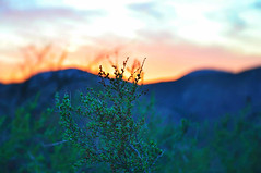 The Planet Life (Faiz (Faizan)) Tags: aesthetic attention beauty calmness color contrast calm california detail environment earth flora green greenry happiness home life mountain nature natural outside outdoor photo