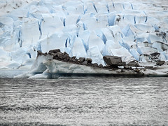 Terminal Moraine Afloat 22 (Gillfoto) Tags: themendenhallglacier mendenhallglacier iceberg terminalmoraine gillfoto