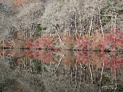 BARE TREE REFLECTIONS (PALEIDIA-Very Busy) Tags: bare trees autumn water reflections