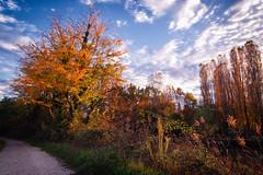 Restera autunnale (Agnolo) Tags: nikon d7100 nikkor 1685 sile parcodelsile restera autunno fall autumn campagna countryside casalesulsile treviso veneto colori nuvole sky clouds passeggiata