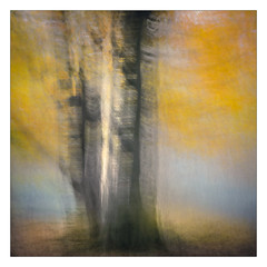 At the Beech (gerainte1) Tags: trees colour autumn icm