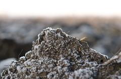 frozen groun (petarnoveski) Tags: nikon d7000 handheld nature