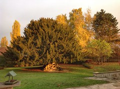 Les feuilles tombent... (TICHAT10) Tags: automne jardin france champagneardenne arbres alittlebeauty coth coth5