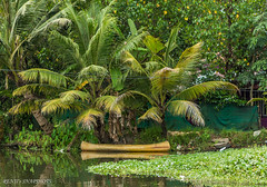 The lone canoe... (Renji's SnapShots) Tags: canoe boat water kuttanad kerala india backwaters outdoor travel nature landscape coconuttree tree plant greenery foliage