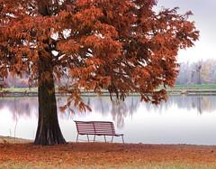 La classica panchina... In autunno (Marzio J) Tags: panchina autunno sequoia lago solitudine marzioiotti paesaggio albero sigma60mm